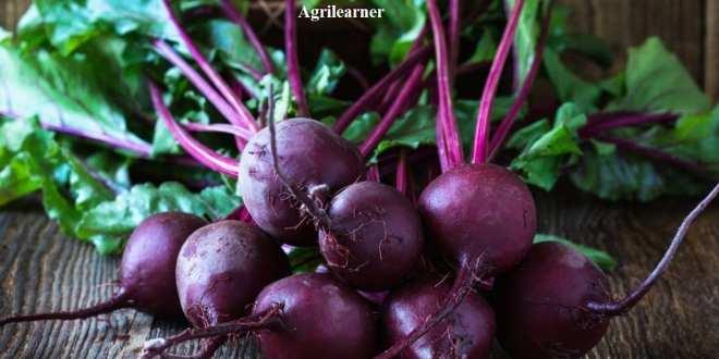 Basics of Bulb,Tuber and Leafy vegetable