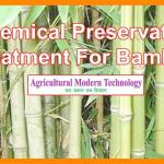 Chemical-Preservative Treatment For Bamboo