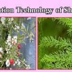 Cultivation-technology-Shatavari