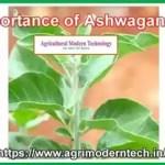 Importance of Ashwagandha