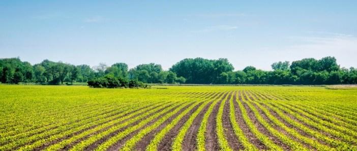 agricultura-biológica-Vida-Rural-810x298