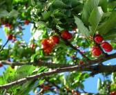 Conheça o novo regulamento europeu para a sanidade vegetal