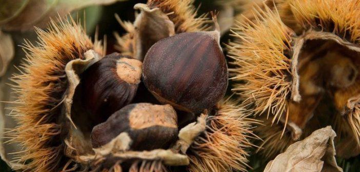 Valpaços recebe seminário sobre as questões fitossanitárias do castanheiro e da castanha