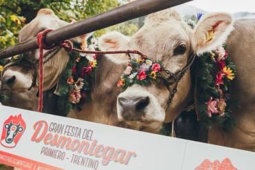 Gran festa del DESMONTEGAR di Primiero 2018