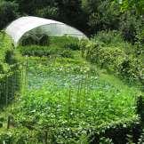 Agricoltura - Serra Primaverile