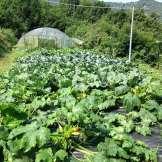 Agricoltura - Visuale Serra Prospettiva