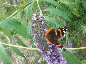 Natura Circostante - Farfalla