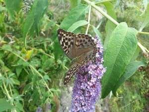 Natura Circostante - La Pianta delle Farfalle