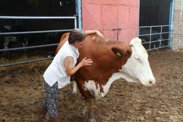 mucca e agricoltrice