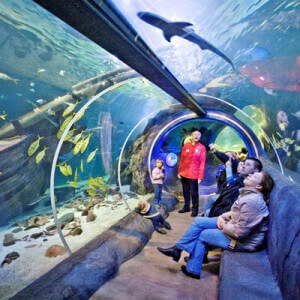 Sealife Acquarium