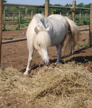 bioparco cavallo