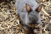 bioparco coniglio