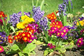 Действие минеральных удобрений на цветы