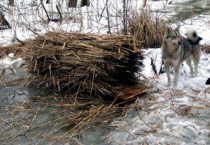 Гнездо для дикой утки из камыша