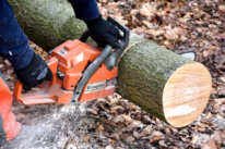 cutting tree