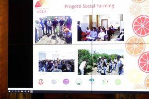 AgroNetwork News - La relazione di Federica Argentati sui progetti realizzati in Sicilia.