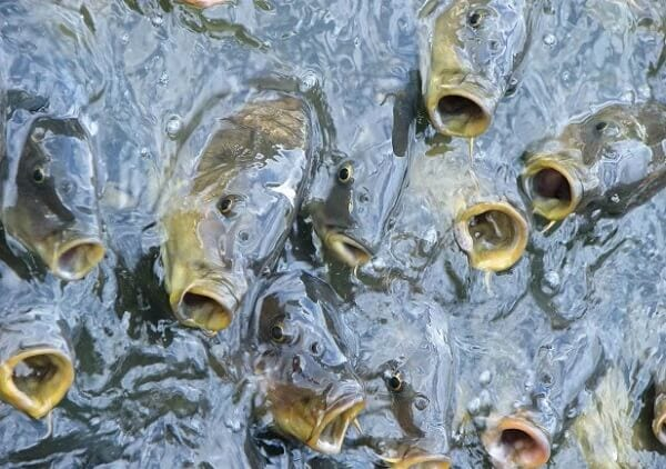 Water-Management-in-fish-Farming
