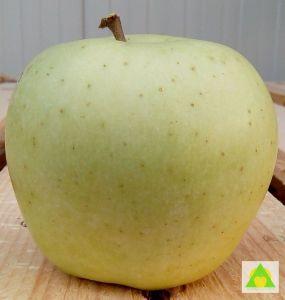 Plod Zlatnog Delisesa