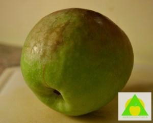 Rdjasta prevlaka naružuje plodove jabuke