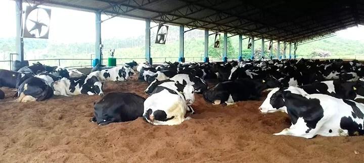 Compostagem - Nutrição Animal - Agroceres Multimix