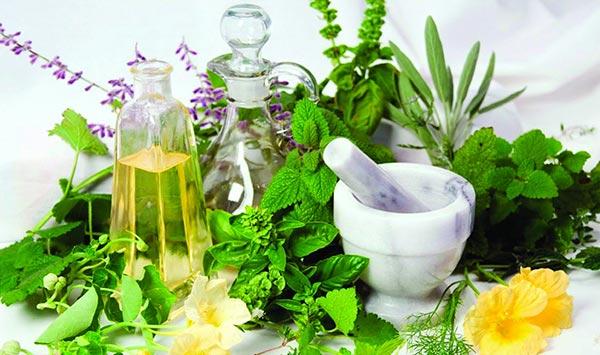 Σε ανοδική πορεία τα αρωματικά και φαρμακευτικά φυτά.