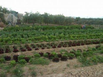 Huerta ecológica en Alicante
