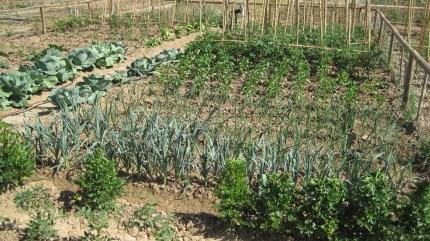 Rotacion de cultivos en el huerto ecologico for Asociacion de plantas en el huerto