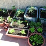 Huerto ecológico en casa: Qué se necesita para empezar a cultivar