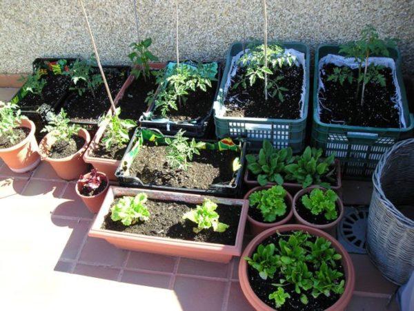 Cultivar un huerto ecológico en casa
