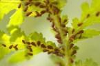 Eliminar Pulgón de las Plantas | Cómo identificar | Métodos de control