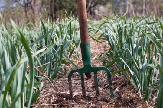 Mulching o acolchado para el suelo hecho con paja