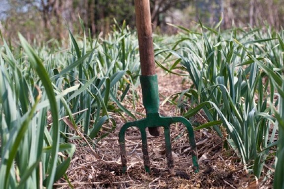 Acolchado o mulching para mejorar el suelo