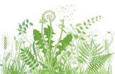 Controlar Malas Hierbas en el Huerto. Mejor prevenir que curar