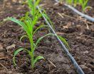 Riego por goteo en el huerto: Cómo instalarlo y qué ventajas tiene