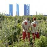 Huerta de Montecarmelo: un oasis de huertos ecológicos en Madrid