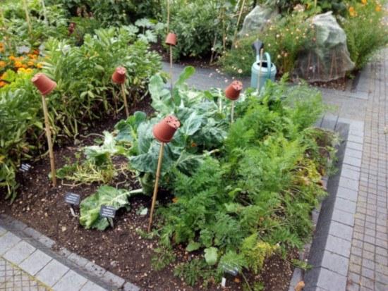 Cómo cultivar plantas del huerto