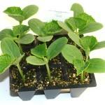Cómo hacer un semillero paso a paso. Recipientes, tierra, semillas…