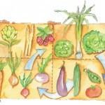 Rotación de Cultivos en el huerto. Qué es, cómo planificar y beneficios