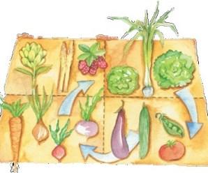 Rotación de cultivos para aumentar la cosecha