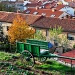 Beneficios de los Huertos Urbanos: para tí y para tu ciudad