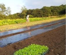 """Manejo Ecológico de cultivos: El ejemplo de """"Apadrina un Tomate"""""""