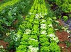 Blanqueo de hortalizas: Todo lo que debes saber