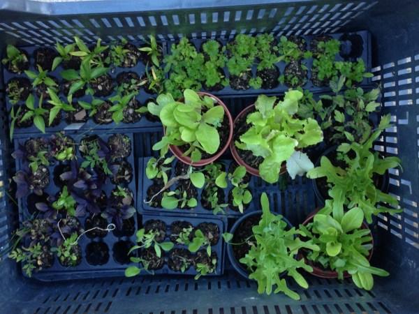 Verduras para plantar en el huerto
