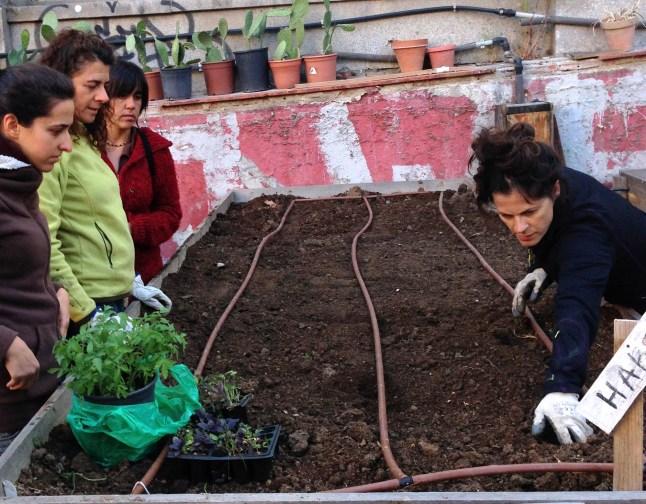 huerto comunitario en Madrid en La Latina