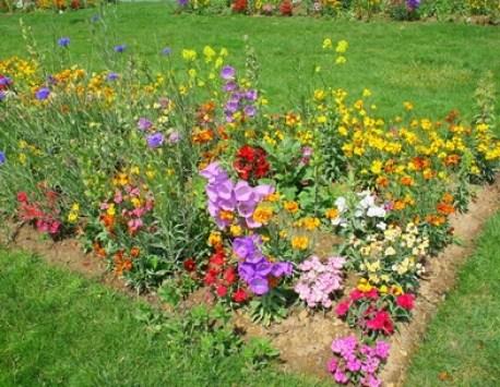 Flores en el huerto