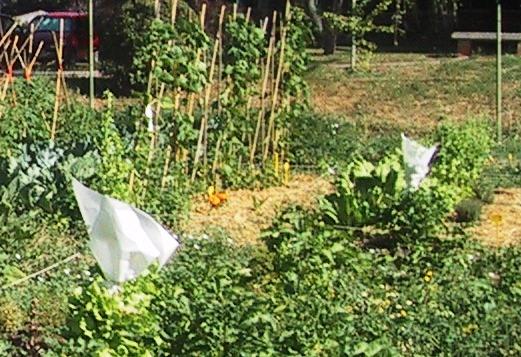 Recolección de semillas en plantas de ...