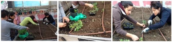 Pasos a realizar plantando en el huerto