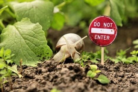 Cómo eliminar caracoles y babosas del huerto