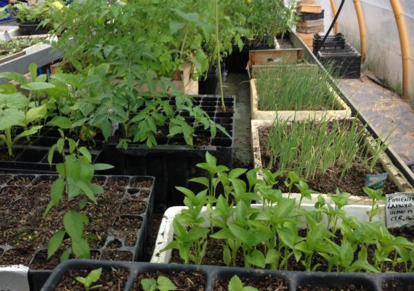 Semillero para plantas del huerto de Cantarranas