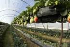 Cultivos HIDROPONICOS para el huerto ecológico